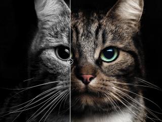 Fotoretouche 'kat'